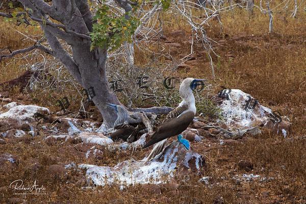 Galapagos1_Apr2019-225