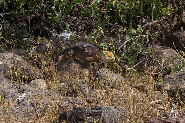 Galapagos1_Apr2019-69