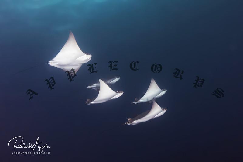 Galapagos9_Apr2019-19