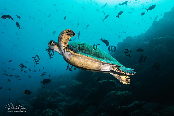 Galapagos2_Apr2019-158