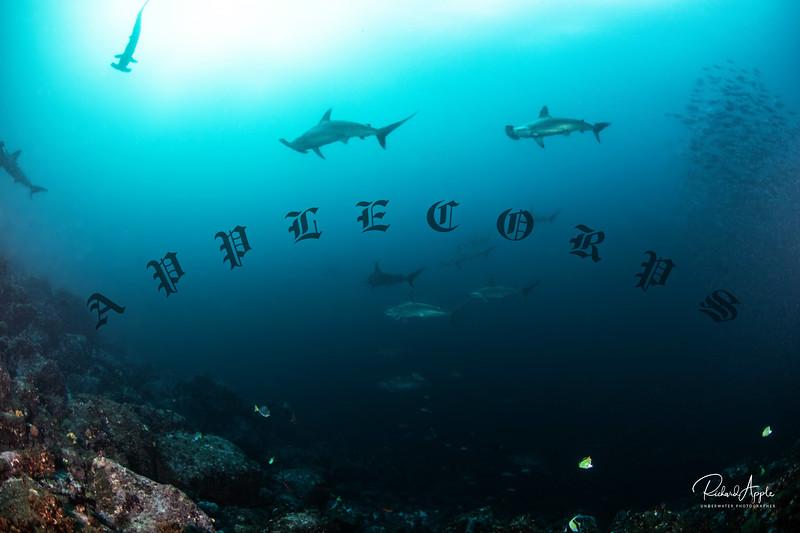 Galapagos4_Apr2019-32