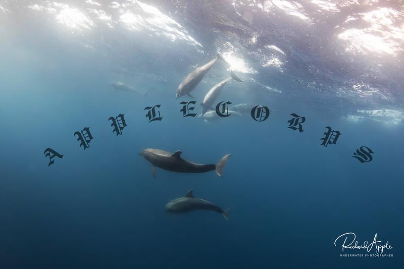 Galapagos4_Apr2019-105