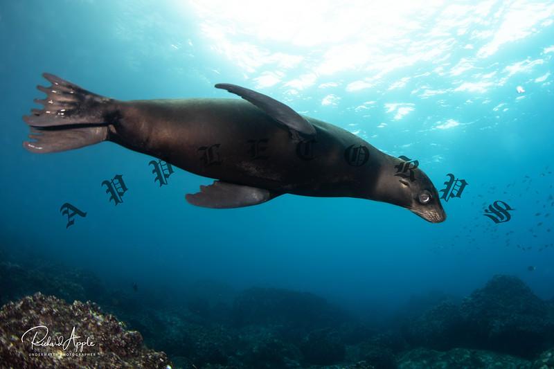 Galapagos4_Apr2019-146