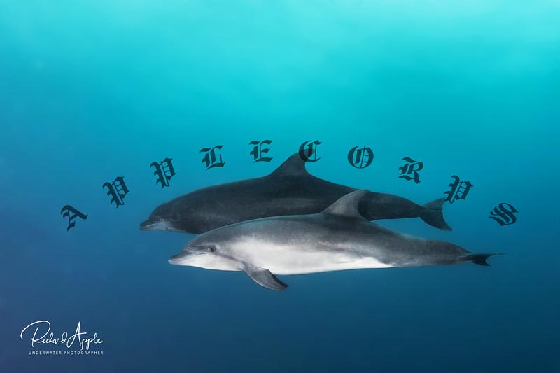 Galapagos3_Apr2019-245
