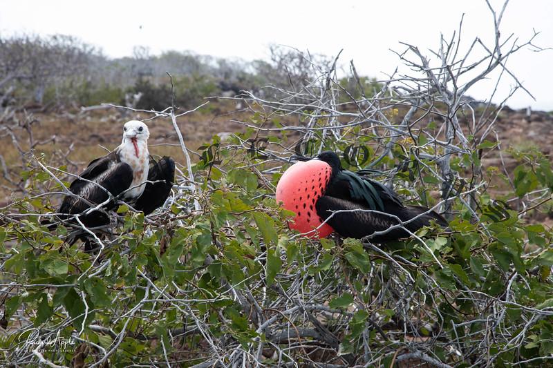 Galapagos1_Apr2019-102