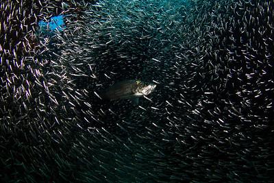 CaymanAug1_2012-111