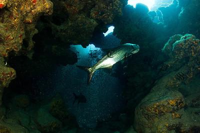 CaymanAug1_2012-133