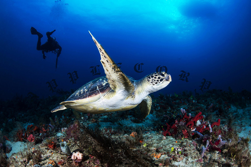 """Green Turtle Says """"Adios"""" To The Camera"""