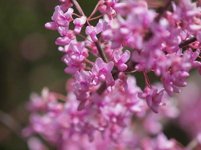 Flowers-008