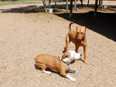 Buddy F  and Charlee B  playing