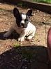 066 Pretty Puppy