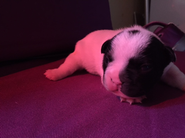 004 Little Baby Louis