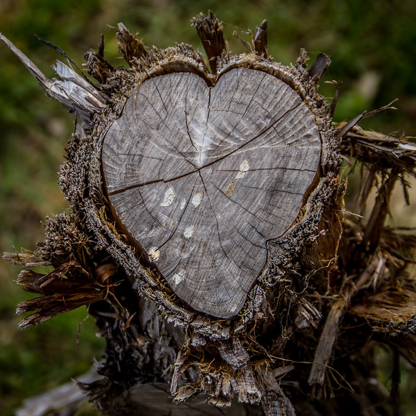 Heart Stump