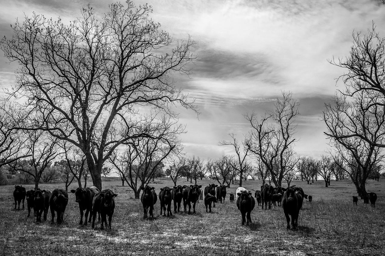 Central Texas Ranch