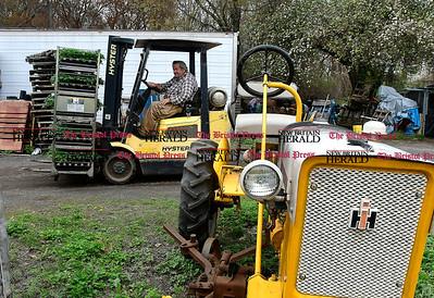 4/27/2017 Mike Orazzi | Staff Jim Zarrella moves plants around at Zarrella Farms in Plainville.