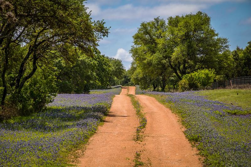 Bluebonnet Trail