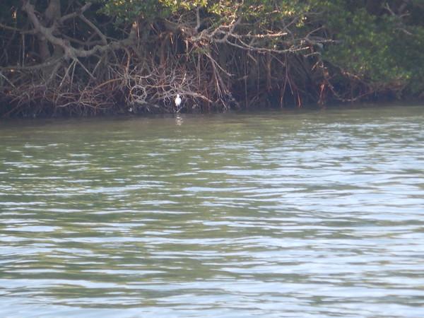 04-07-18 Barrier Island 8am