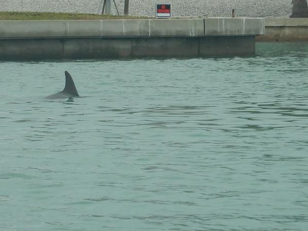 04-08-18 Barrier Island 2pm