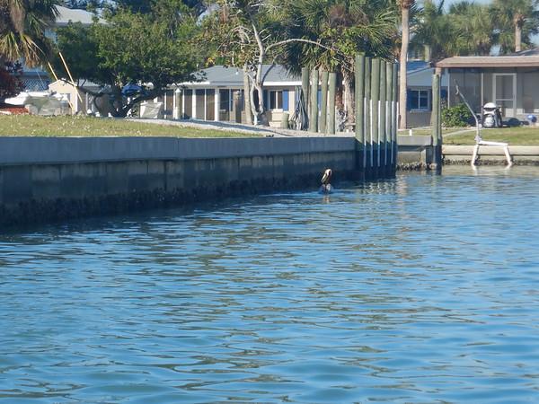 04-18-18 Barrier Island 8am