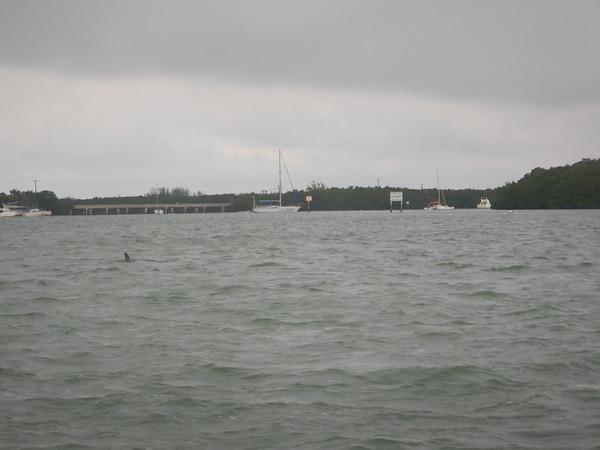 04/11/18 Barrier Islands 0800