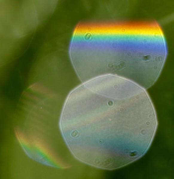 Prioli3 raindrops