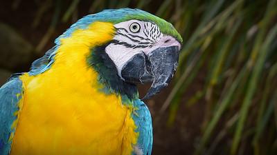 """""""Macaw, Maleny."""""""