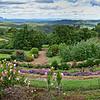 """""""Maleny Botanic Gardens."""""""
