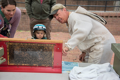 A local beekeeper used a see-through hive to help curious people of all ages understand the art of honey production. [Bill Giduz photo]