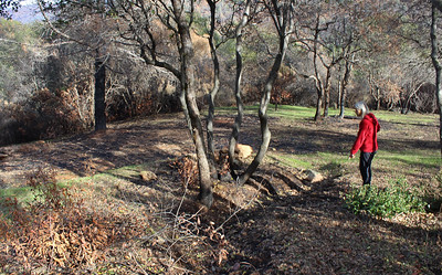 Katia Wilder walks through the area around her Cherokee home that has been cleared of the dense, burned brush in the background. The defensible space allowed firefighters to save her home. (Steve Schoonover -- Chico Enterprise-Record)