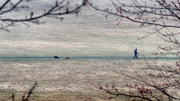 BRYAN EATON/Staff Photo. Two dogs follow their human friend during a walk at Woodsom Farm despite Monday morning's rain. Photo was taken from Whitehall Road in Amesbury.