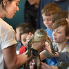 BRYAN EATON/Staff Photo. Niki Tracchia of Curious Creatures in Groveland shows off an alligator during a presentation at Joe's Playland at Salisbury Beach on Thursday afternoon.