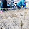 BRYAN EATON/Staff Photo. Burlington second-graders help to plant dune grass on Plum Island Point near the Sawyer Playground on Wednesday morning. Partners in the planting project included New England Wetland Plants, the city of Newburyport and Mass. Dept. of Conservation  and Recreation.