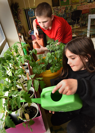 BRYAN EATON/Staff Photo. Alexander Chernick, of Salisbury, top, and Chloe Borrelli, of Amesbury, both 8, take their place in the rotation of watering plants for the garden at the Boys and Girls Club run by art coordinator Coreen Pecoraro. The students started all kinds of vegetables from seed and will be transplanting them in their expanded and newly fenced in garden within a couple weeks. Much of the food they harvest will be used in the club's cooking class.