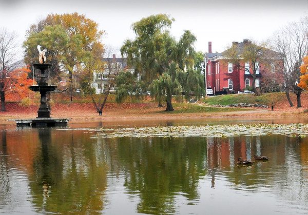 BRYAN EATON/File Photo. The willow tree at center of photo at Newburyport's Bartlet Mall has been taken down along with other trees around the Frog Pond.