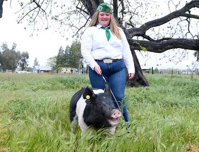Rachel Kurth, 14, works with her pig Ziggy on April 4 in Orland. (Matt Bates -- Enterprise-Record)
