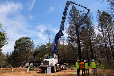 A 170-foot-tall grapple saw grabs and cuts a piece of a burned hazardous tree in a demonstration July 25, 2019, in Paradise. (Camille von Kaenel -- Enterprise-Record file)