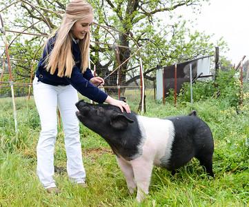 Amber Kurth, 17, pets her pig Wilbur on April 4 in Orland. (Matt Bates -- Enterprise-Record)