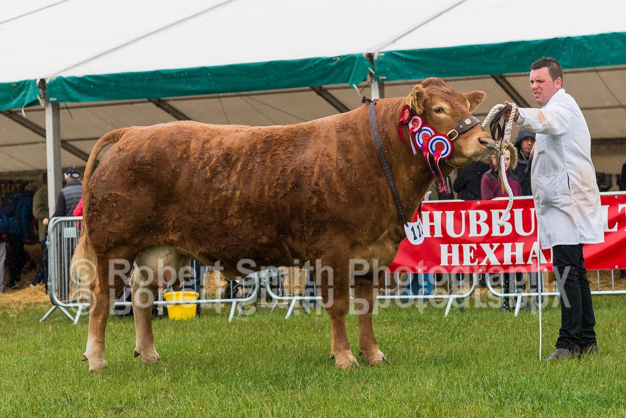 Champion of Champions (113)  Interbreed Beef - Limousin Cow and Calf from Messrs Jenkinson