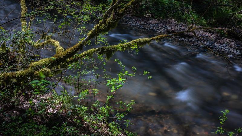 Northwest moss.