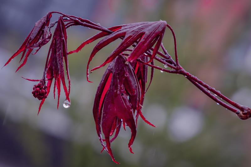 Rain drop.
