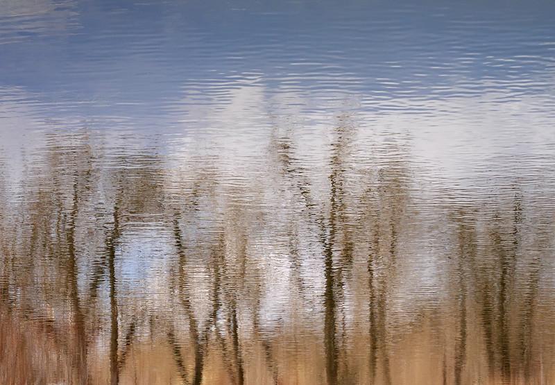 Pond reflections at Bowmont Park- April 2, 2019