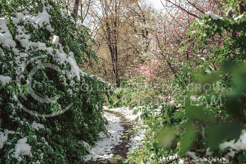 A Manhattan trail is blanketed with snow after the midwest is hit with a snowstorm. April 20, 2021. (Dylan Connell   Collegian Media Group)