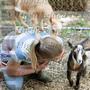 Goats (16 of 185)