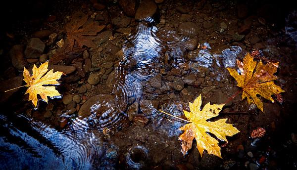 Leaves and rain, Nisene Marks