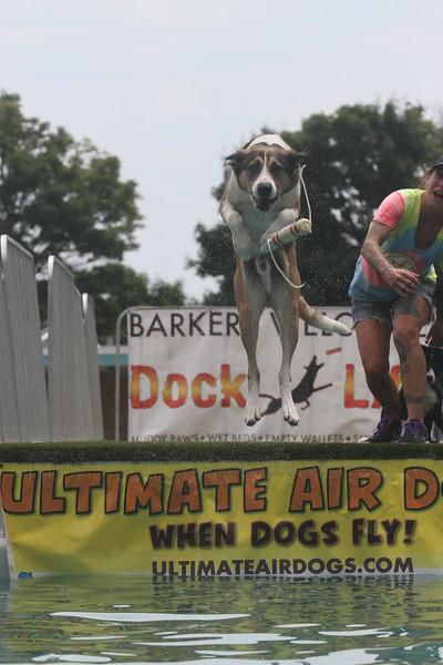 Cool Dog!