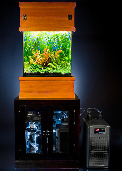"<span class=""journalHeading"">15 Gallon Tall</span><div class=""journalBody""><span class=""pos_right""></div></span><span align=""center""class=""journalBody"">This is a tank that I created for my cubicle at work.  It has a long tall design in order to fit into the small space that was available in my cube.  It's a high-tech tank with a custom built cabinet that I built.  It uses metal halide lights and even has a chiller. It's pH controlled with CO2 injection and uses garden soil as the substrate (topped with fine gravel).  It's peaceful and beautiful to sit and watch!</span>"