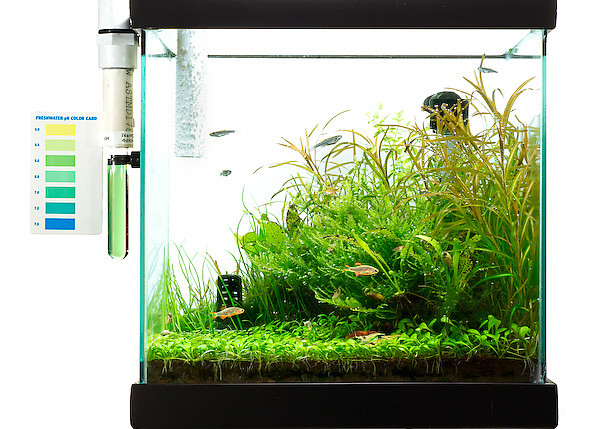 "<span class=""journalHeading"">5 Gallon Cube</span><div class=""journalBody""><span class=""pos_right""></div></span><span align=""center""class=""journalBody"">I created this little tank to sit on my kitchen counter. I love to experiment with aquatic plants and see how they grow.  When I first saw Takashi Amano's Nature Aquarium books, my first thought was, ""Wow, how many tanks did he have to go through to get to these beautiful aquascapes.""  In this tank, I proved to myself some of the mechanics of using garden soil, how to grow Glosso, and how hard small tanks are to keep trimmed!   Pictured on the side is a home-made dropchecker which is used to indirectly measure the amount of CO2 in the water.  CO2 is a much needed plant nutrient that is usually limited.  But in these tanks, it is injected to produce explosive growth.</span>"