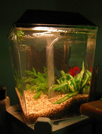 1 Gallon Betta Tank