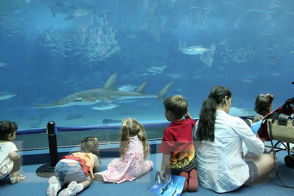 Aquarium2007-09-03_16 13 16