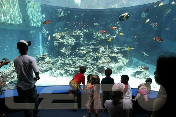 Aquarium2007-09-03_15 20 50